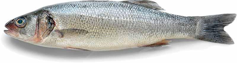 Fisk er godt til Zophobas morio