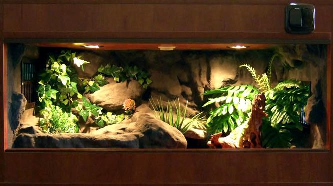 Krybdyr terrarium